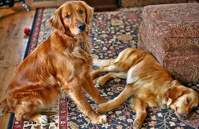 Roscoe and Bailey