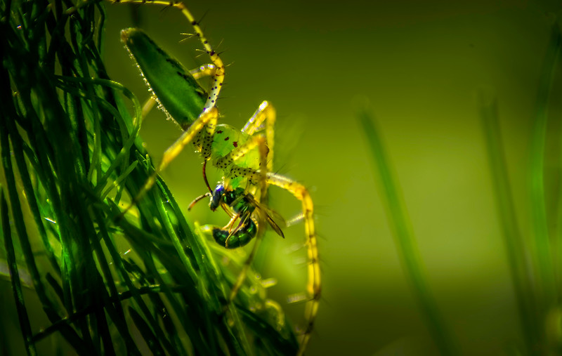 Spiders-Arachnids-055.jpg