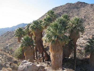 Trail Run - Art Smith Trail, Palm Desert, California  11.23.07