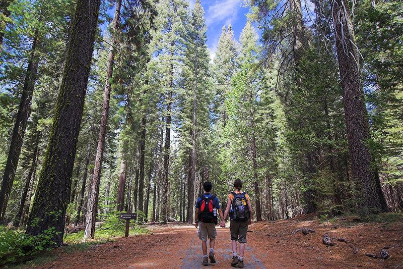 Hiking in Tuolomne Grove, Yosemite September 2006.