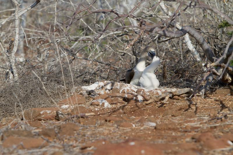 BFB Feeding Chick.jpg