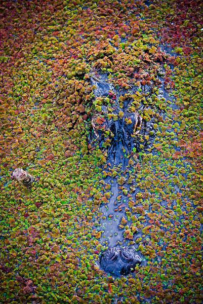 Everglades12.jpg
