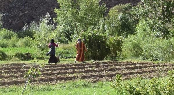 Morocco Wheat