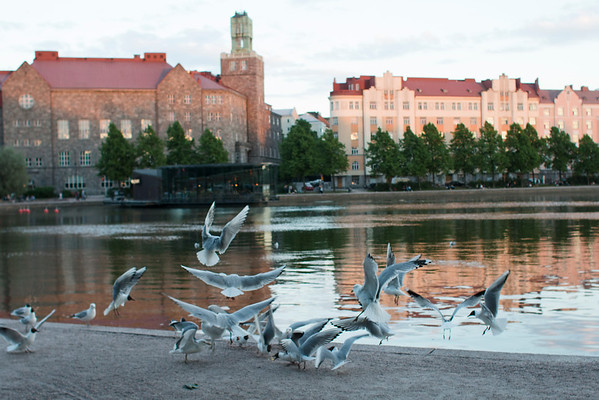 Seagulls of Helsinki and other stories