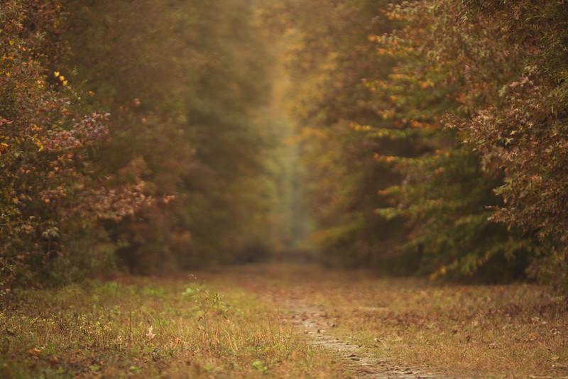 Fall Delight.jpg