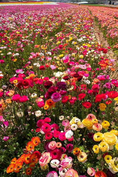 Spring Flowers A-179.jpg