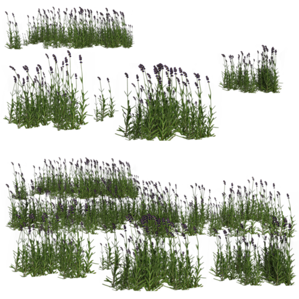 lavender_by_brokenwing3dstock-d57e7p2.png