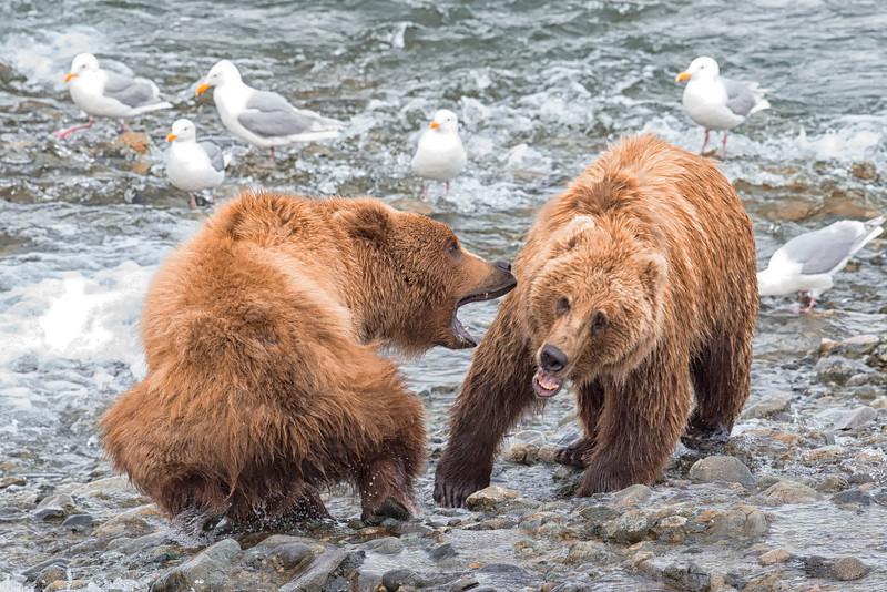 Alaska_2013_FH0T5011.jpg