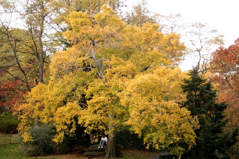treesman.JPG