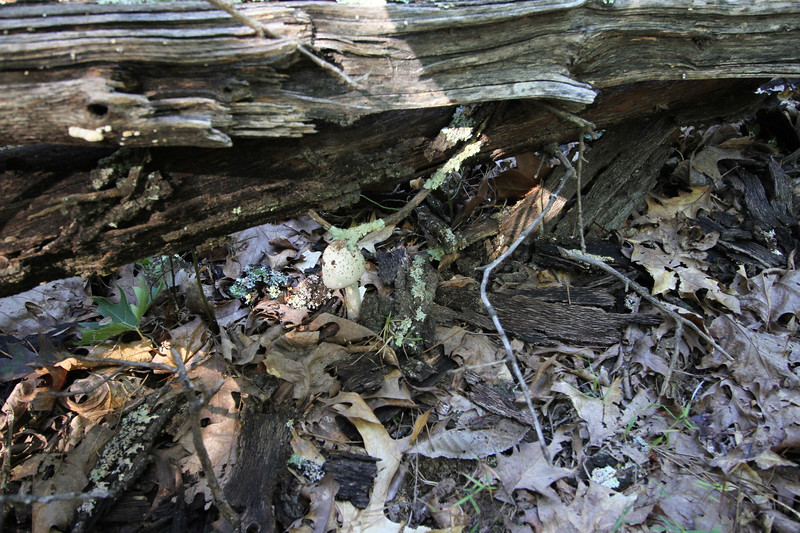 20160918-Ponca Arkansas - Hideout Hollow Trail-20.jpg