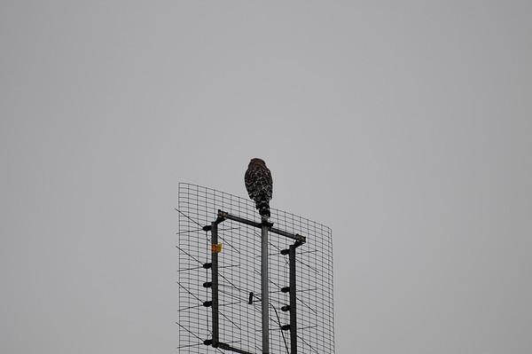 Hawk 9.16.11