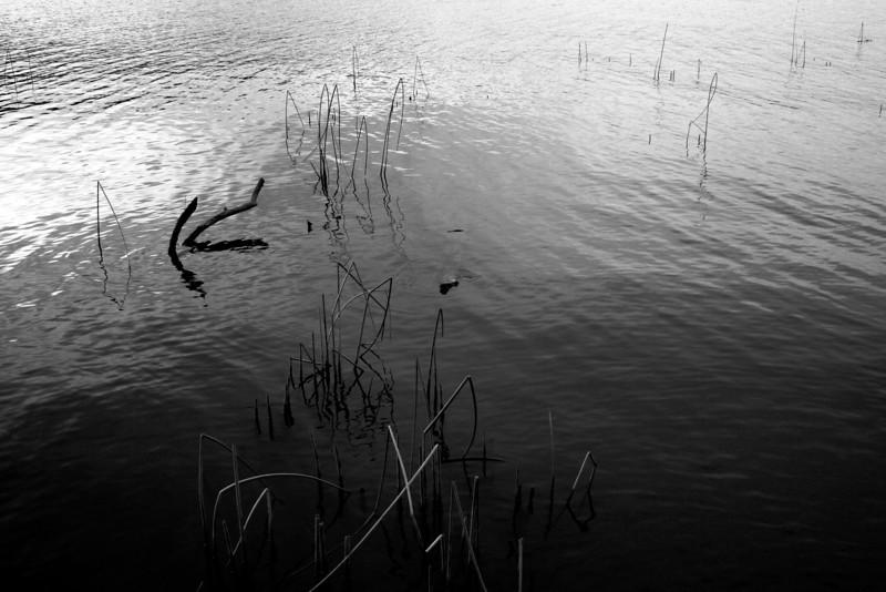 090228-041BW (Abstract; Driftwood, Grass, Lake).JPG