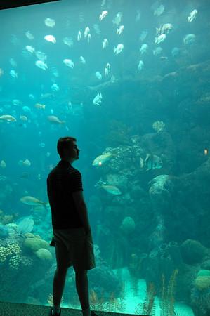 Florida Aquarium (Tampa)