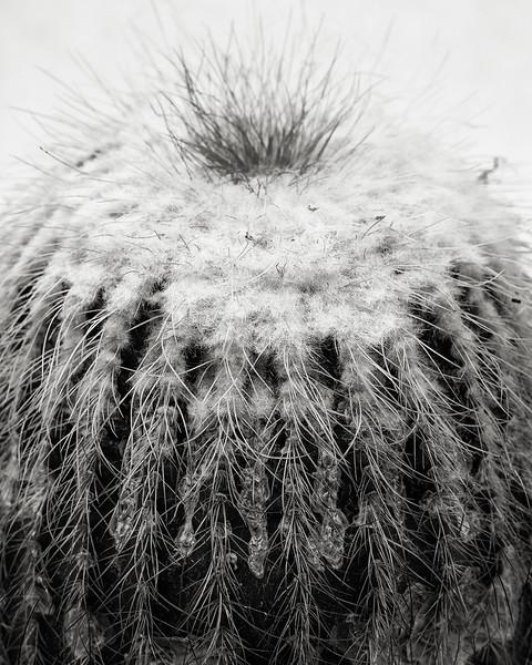notocactus-schumannianus.jpg
