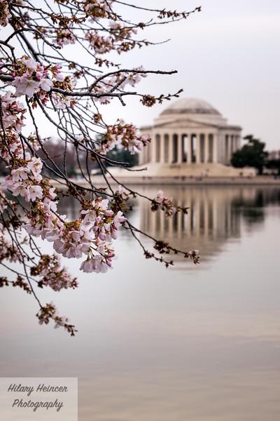 CherryBlossoms2017-180.jpg