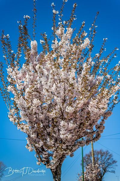 Spring blossom-2110.jpg