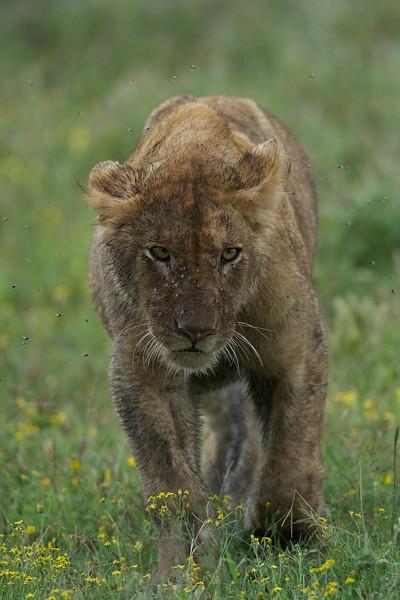 Serengeti_Feb_2013_FH0T7223.tiff.jpg