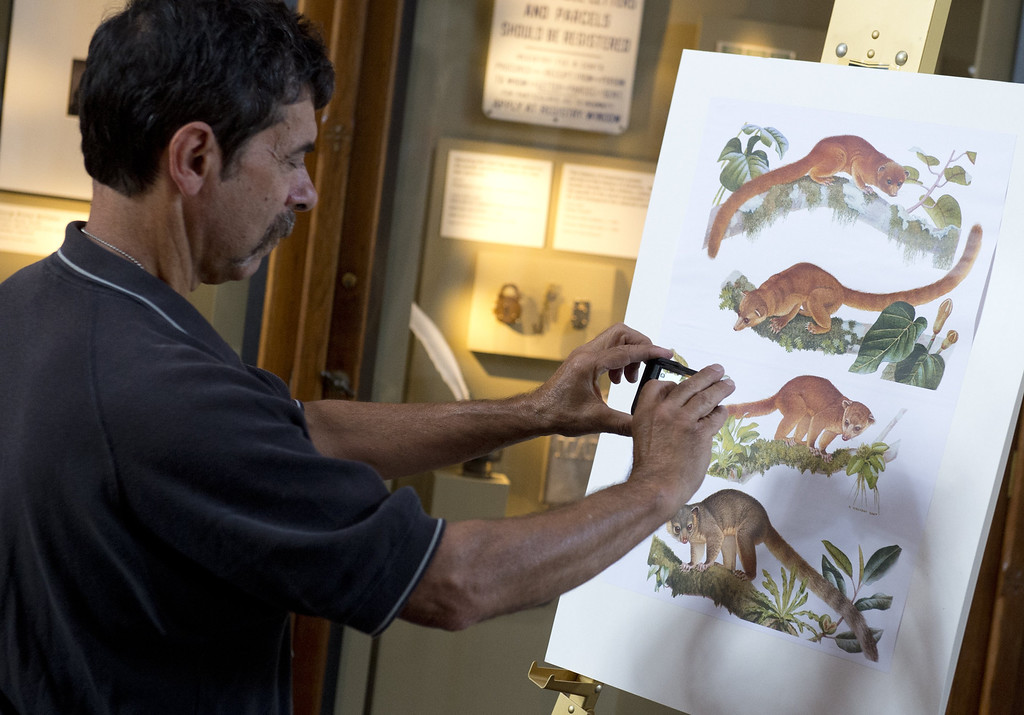 . A man photographs illustrations of an olinguito, the first carnivore animal species to be discovered in the American continents in 35 years, during a press conference announcing the discovery at the Smithsonian Institution in Washington, DC, August 15, 2013.  AFP PHOTO / Saul LOEBSAUL LOEB/AFP/Getty Images