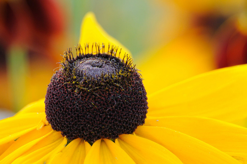 flowers_20080714-009.jpg
