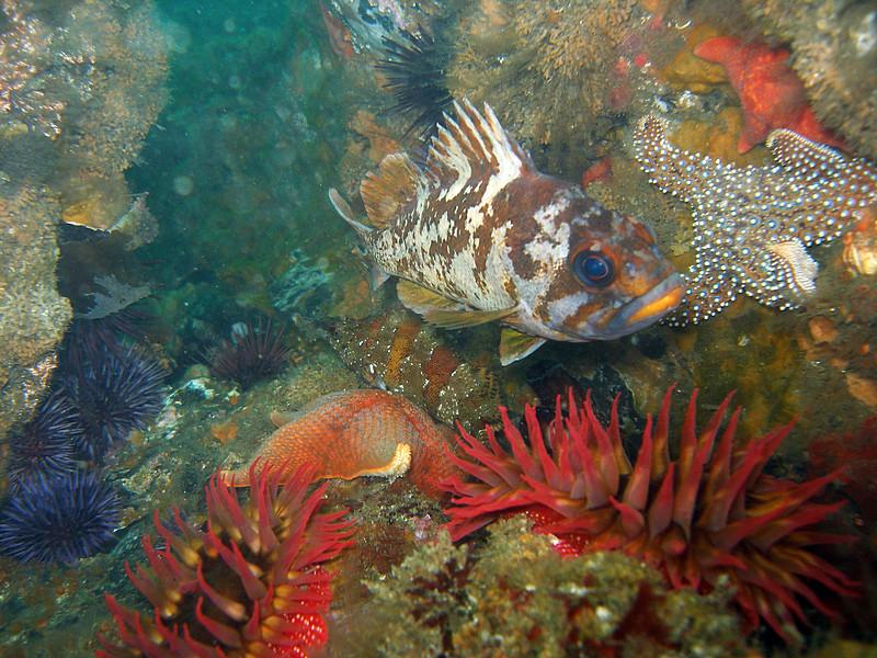 Life on Naples Reef
