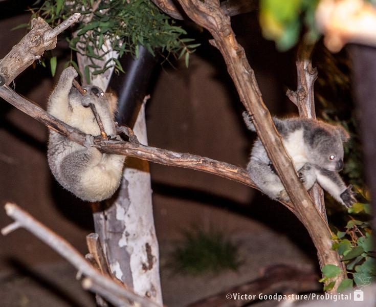 Koalafornia-36.jpg