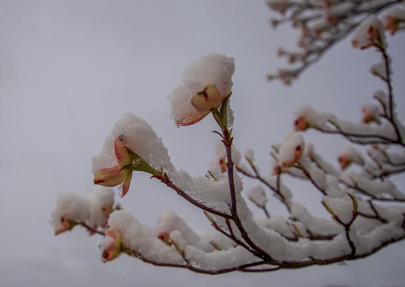 April20-Snow1.jpg