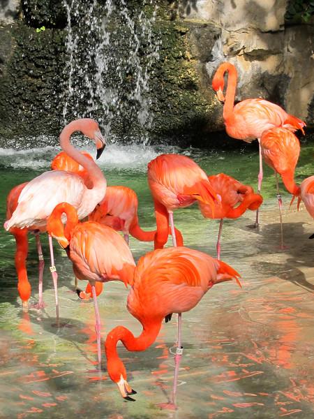 flamingo-101.jpg