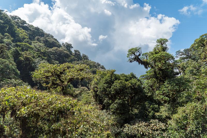 Costa Rica 2015-4153.jpg