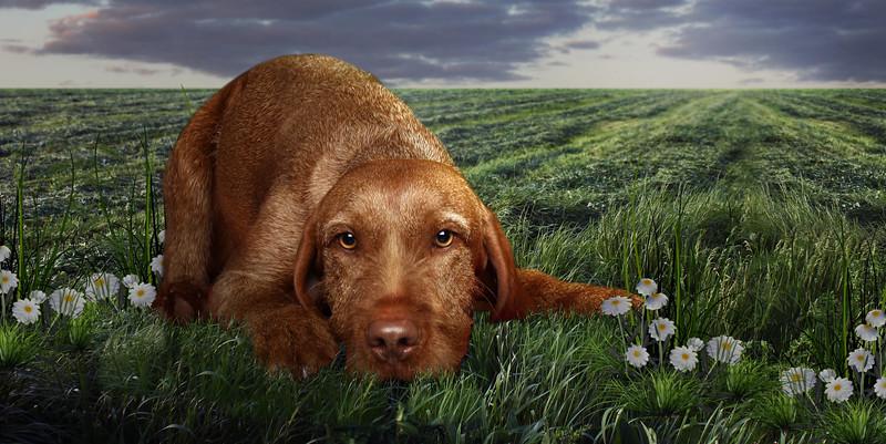 saule-dog-7.jpg