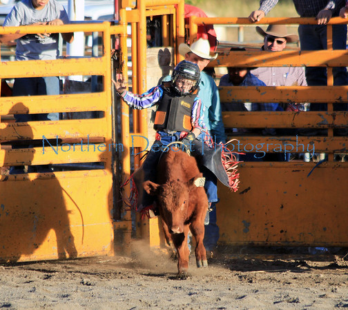 Calf and Steer Riding