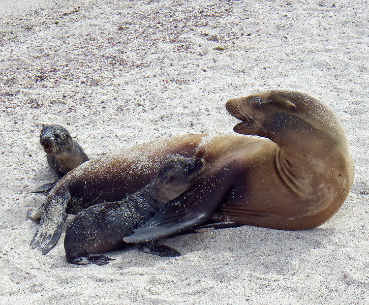 Mean mother seal did NOT like the baby intruder.