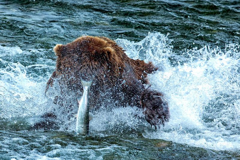 Alaska_2014_FH0T7586.jpg