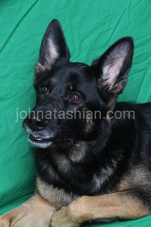 Trantolo & Trantolo - Staff Portraits - March 24, 2012