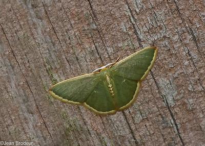 Autres papillons de Guyane francaise