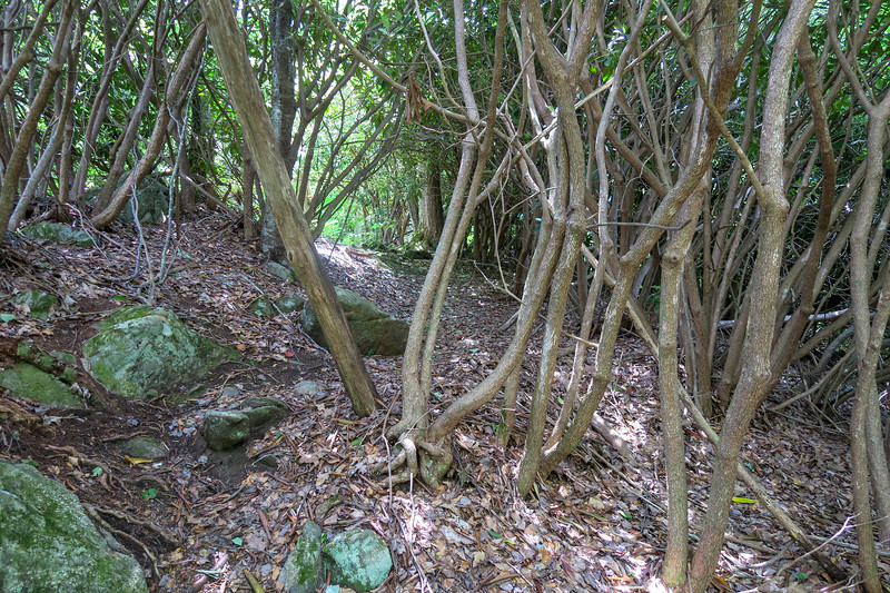 Green Mountain Trail -- 5,050'