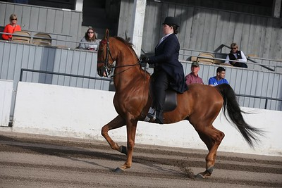 44. Bluegrass Select Series 3 Gaited Country Pleasure Amateur / Jr. Exhibitor