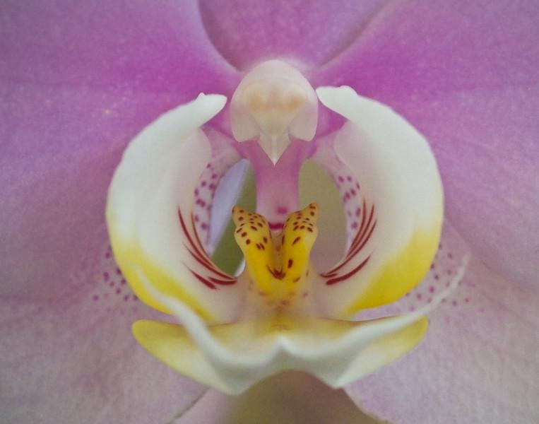 orchid_031110-8.jpg