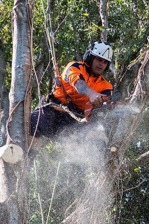 Swann's Arboricultural Services