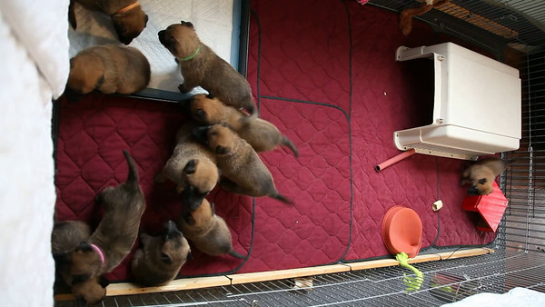 Nia puppies July 1, 2014