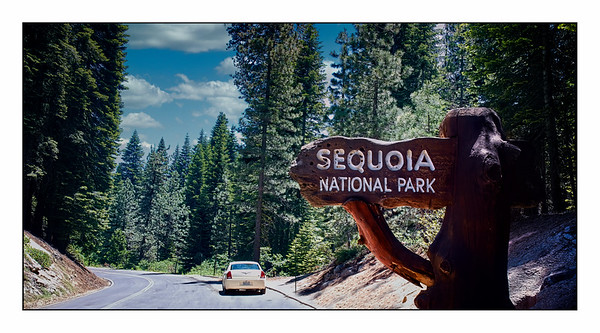 Sequoia National Park - USA - Over The Years.