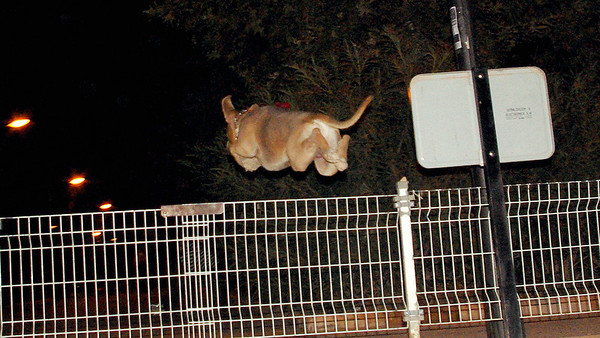 DOGS LEAPING GATE