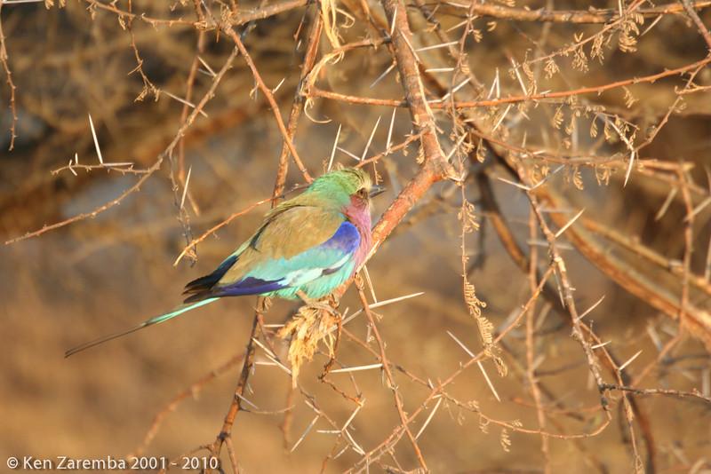 20070922-BirdsofAfrica-109