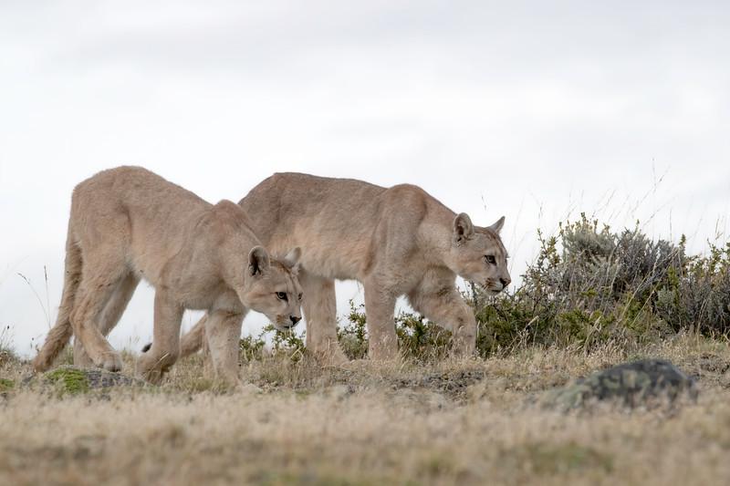 Sibling hunters