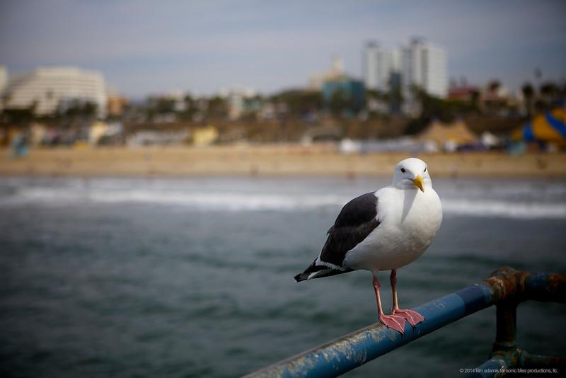 Seagulls agree....