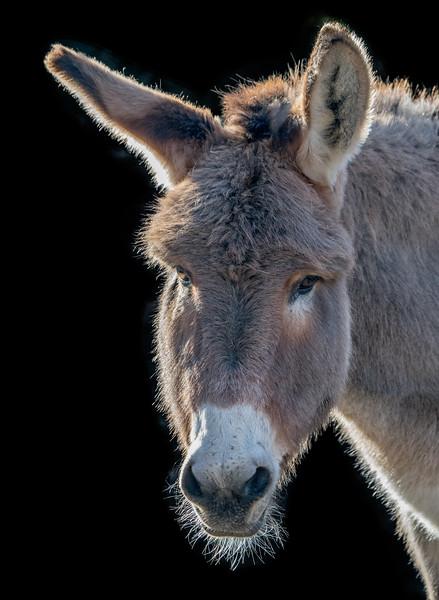 Donkey head close-up