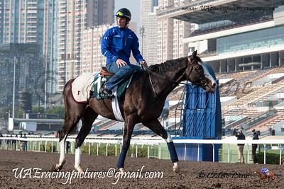 Hong Kong HKIR Friday Trackwork