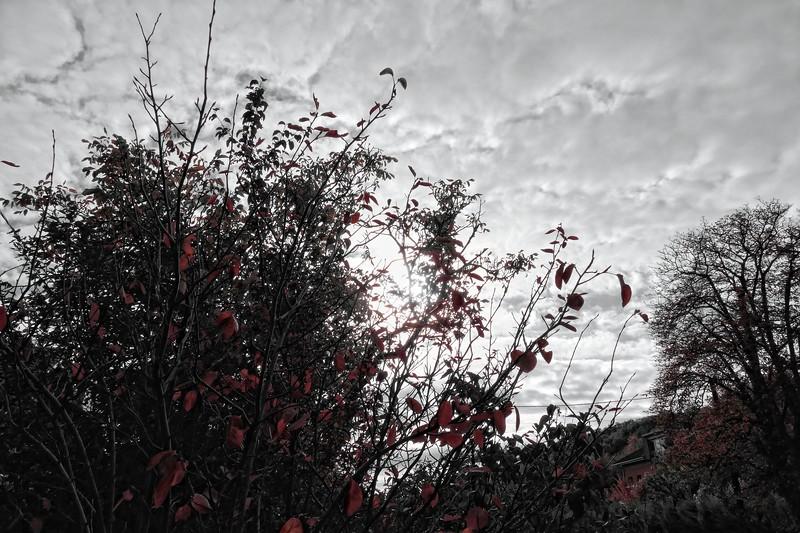 HerbstGold2017