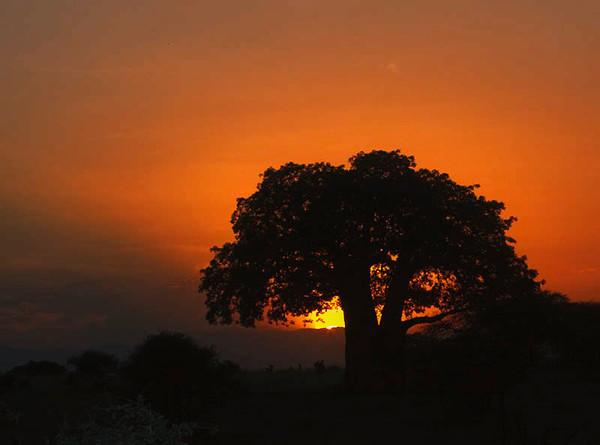 Tanzania - February 2010