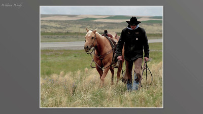 Hank, An American Cowboy