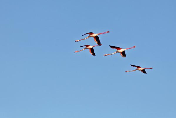 Vol au dessus des marais